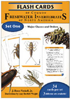 FLASH CARDS OF COMMON FRESHWATER INVERTEBRATES OF NORTH AMERICA SET 1: MAJOR CLASSES AND ORDERS